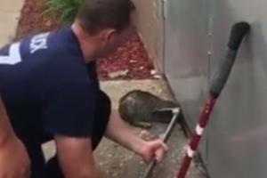 철문에 머리 낀 고양이… 액체설은 거짓?