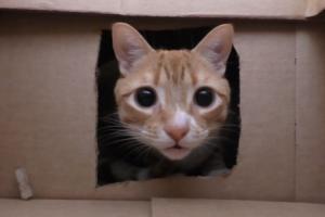 '이게 고양이 천국' 종이박스 50개로 만든 고양이 미로