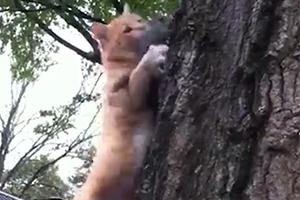 치료 후 방생하던 다람쥐 낚아채 달아나는 고양이