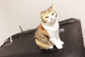 '귀여우니까 무죄' 55인치 TV 망가뜨린 고양이