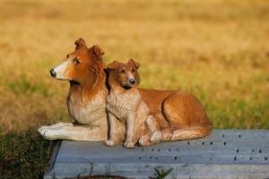 사람과 반려동물 함께 묻힌다…벨기에 입법 추진