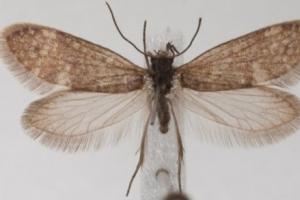 나비와 나방, 정설보다 7000만년 앞당겨진 2억년 전부터 진화