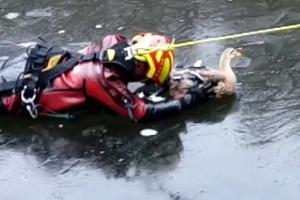 [영상]'살려줘요' 연못 얼음에 달라붙은 오리