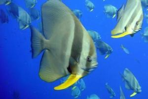 잦은 물 갈아주기가 물고기간 싸움을 부른다?
