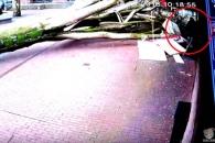 강풍에 뽑힌 거대 나무, 유모차 밀고가는 여성 덮쳐
