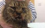 집사 자살 막아준 고양이