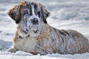 개와 고양이 위협하는 겨울철 5대 질병