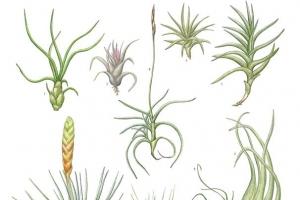 [이소영의 도시식물 탐색] '슈퍼 식물'을 원하는 시대