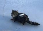 연못 건너다 얼어붙은 고양…