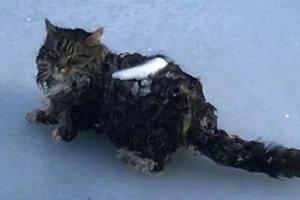 연못 건너다 얼어붙은 고양이