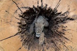 20년 만에 발견된 통나무 속 미라 사냥개