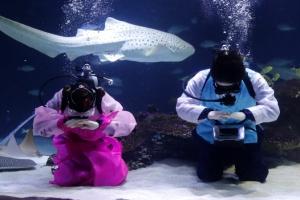 [포토] '새해 복 많이 받으세요'… 설 맞이 수중 세배