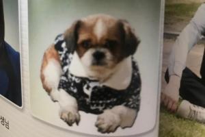 고등학교 졸업앨범에 강아지가 실렸다