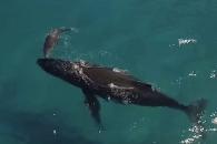 고래 모자의 아름다운 유영