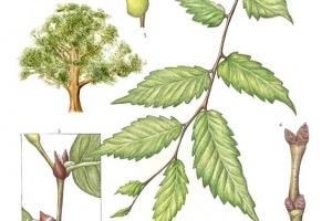[이소영의 도시식물 탐색] 도심에서 크고 오래된 나무를 보셨나요