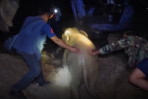 '우물에 빠진 아기 코끼리' 구출대작전