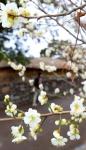 성큼 다가온 봄… 새달 초…