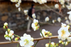 성큼 다가온 봄… 새달 초까지 포근