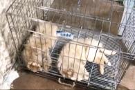 (영상) 천안 펫숍, 개 79마리 사체로 발견 현장