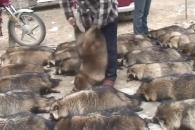 """""""동물도 고통을 느낀다"""" 모피반대 캠페인 영상 '눈…"""