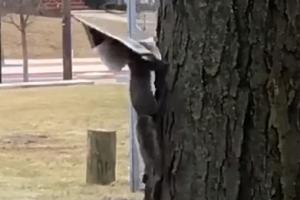 세상 돌아가는 소식 읽는 다람쥐