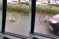여성이 던진 빵조각 먹다 차에 밟힌 비둘기