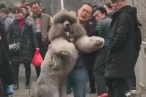 산에서 퍼져버린 강아지..낑낑 안고 내려온 주인