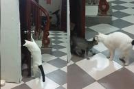 [별별영상] 화장실 갇힌 동료 구해주는 고양이