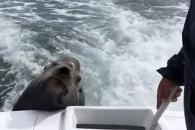 """""""물고기 있는 거 다 알아요"""" 바다사자의 능청 애교"""