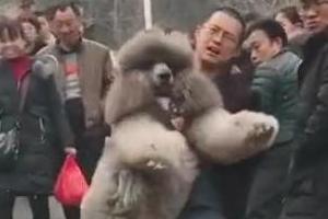 산에서 퍼져버린 강아지…낑낑 안고 내려온 주인