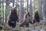 '아, 깜짝이야!' 곰 가족의 화들짝