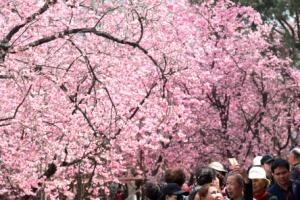 [포토] 중국 쿤밍에 먼저 온 봄
