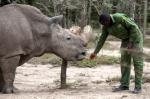 지구상 마지막 흰코뿔소의…