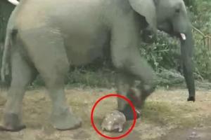 코끼리에 밟힐뻔한 거북이 '십년감수'