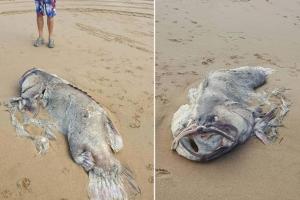 호주 해변서 발견된 2m짜리 괴생명체, 알고 보니…