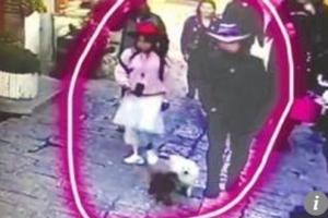 중국서 잃어버린 푸들 4천㎞ 여행후 11일만에 극적 귀가
