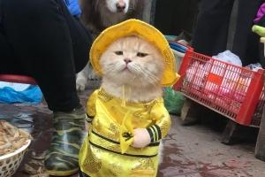 베트남 '생선 파는 고양이' SNS 스타…귀여운 복장에 시크한 표정