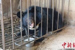 '강아지로 알고 키웠다?' 흑곰 집에서 키운 중국인