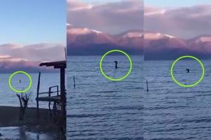 알바니아 호수 발견 괴생물체, '제2의 네시인가?'