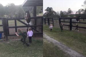 [별별영상] 아이들과 새끼 경주마의 달리기 시합