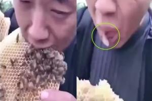 꿀벌 가득한 벌집 먹다가 봉변당한 中 남성
