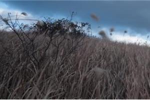[박미경의 사진 산문] '빗개'의 시선으로 4ㆍ3을 환원하다