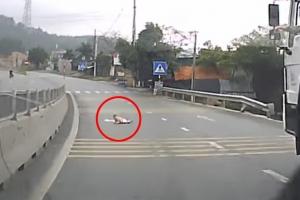 엄마가 한눈판 사이 도로로 기어나온 아기