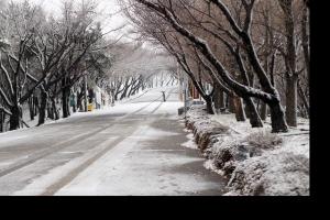 """부산 눈 교통통제…교육청 """"휴업 또는 등교시간 조정"""""""