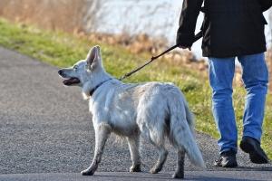 개파라치 제도 무기한 연기…맹견 5종엔 어떤 개가?