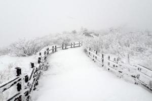 '춘분인데 눈이 펑펑' 계절 역주행…전국서 교통통제·학교 휴업