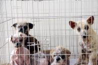 동물자유연대, 부산 주택 옥상에 방치된 개들 구조