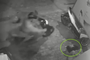 주인 품 속 개 훔쳐가는 2인조 오토바이 개도둑