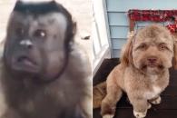 '누가 누가 더 닮았나?' 인간 쏙 빼닮은 동물들 화제…