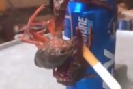 맥주 캔 매달려 담배 피우는 가재 화제